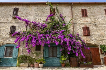 Big pink Bougainvillea Tree on the wall of an old house with green shutters in Fermo, Italy. 스톡 콘텐츠 - 131952315