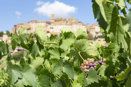 View on the church and houses of the historic Italian village of Cossignano in the province of Ascoli Piceno in the Marche region. From the wine fields on the Contrada Gallo. 스톡 콘텐츠 - 131952414