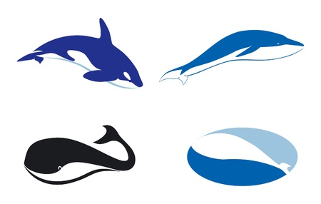Vector silhouette of different whales, silhouette illustration Vector