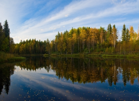 Beautiful autumn forest at the rivers coast  Karelia