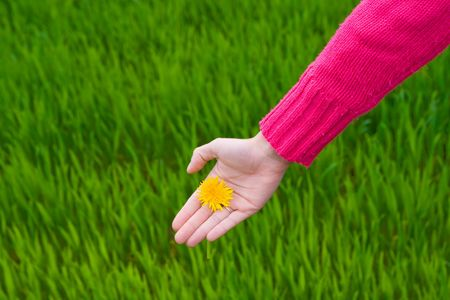 younglady: Hand holding flower over green grass. Copy space on left. Horizontal.