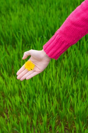 younglady: Hand holding flower over green grass. Copy space. Vertical.