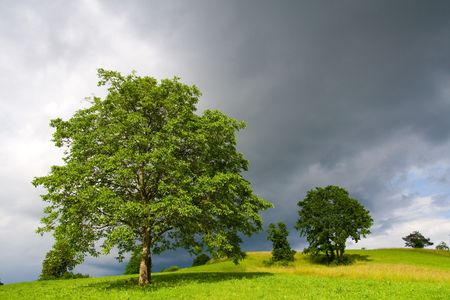 Field with tree and dark sky. Including copy space.