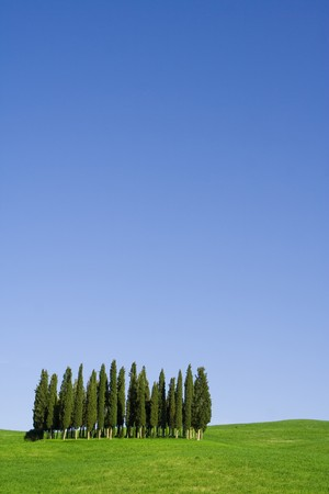 val d orcia: Typical Tuscany (Val d Orcia) landscape with blue sky, rolled hills and cypress. Stockfoto