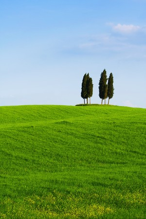 orcia: Typical Tuscany (Val d Orcia) landscape with blue sky, rolled hills and four cypress.