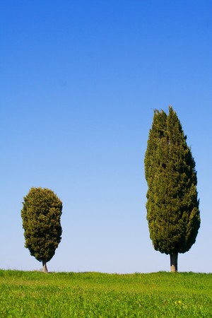 val d orcia: Typical Tuscany (Val d Orcia) landscape with blue sky, rolled hills and two cypress.