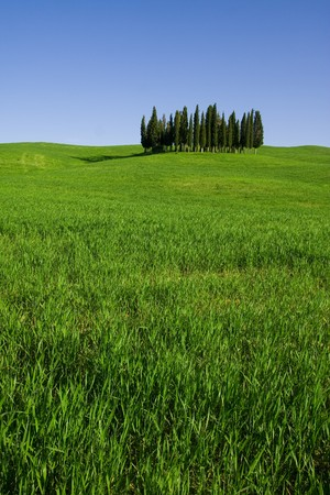 Typical Tuscany (Val d Orcia) landscape with blue sky, rolled hills and cypress. photo