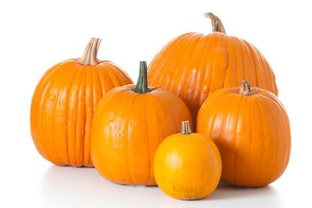 zucche halloween: Molti zucche di halloween arancione di diverse forme e dimensioni isolati su sfondo bianco.