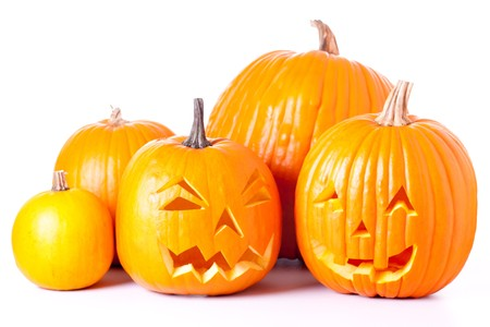 Many orange halloween pumpkins and Jack O Lanterns isolated on white background.