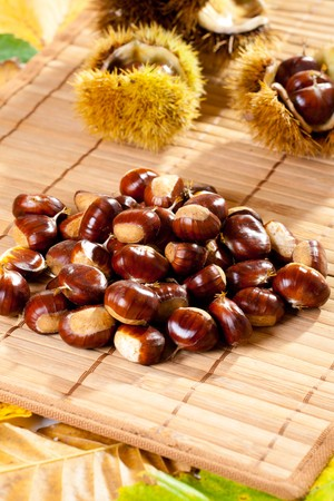 Bunch of freshly picked chestnuts (Castanea) with prickly shell in background. Stock Photo