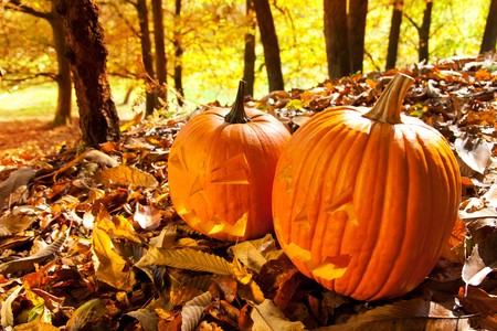 Carved Halloween Jack O Lanterns of different shapes and sizes in forest. photo