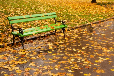 Empty bench in park with many orange autumn maple leaves around and on it.