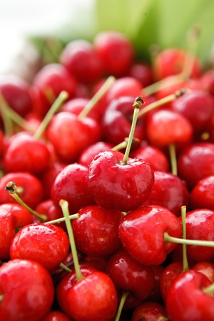 homegrown: Bunch of delicious and ripe home-grown cherries.