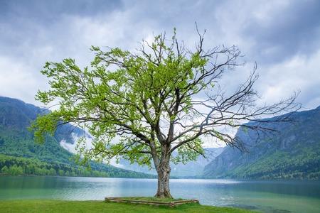 bohinj: Lake Bohinj, Slovenia in spring