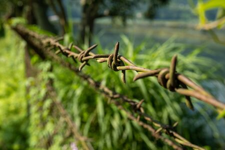 Rows of stretched metal barbed wire with sharp spikes against a background of tropical vegetation. 스톡 콘텐츠