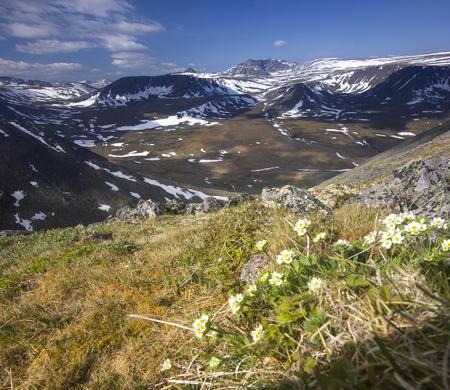 ural: Urals mountain meadows