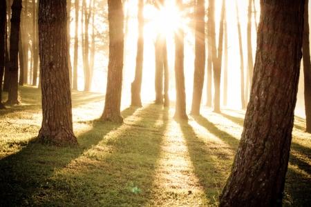 light shine through the trees