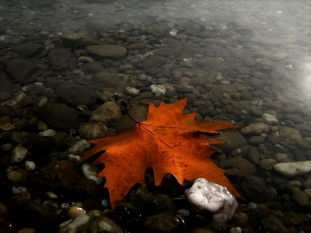Autumn composition- maple leaf floating on the wate,r with pebbles on the bottom photo