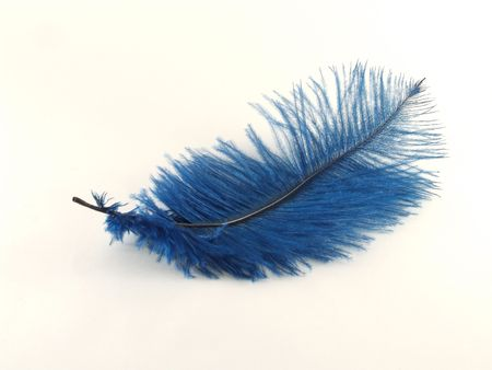 black plumage: Isolated blue feather