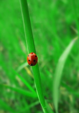 ladybird sitting on the fresh green grass Stock Photo - 5257696