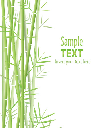 Vector bamboo background Stock Vector - 8147762