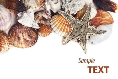 Frame made of various seashells and starfish