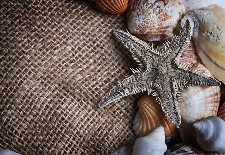 seashells and starfish photo