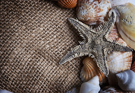 seashells and starfish photo