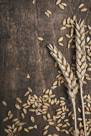cosecha de trigo: Orejas de trigo en un tabl�n de madera vieja