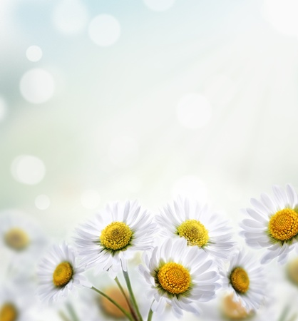 Daisy flower with beautiful spring bokeh photo