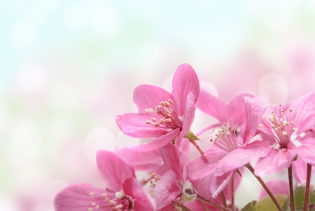 april flowers: Closeup of beautiful pink flowers in the garden Stock Photo
