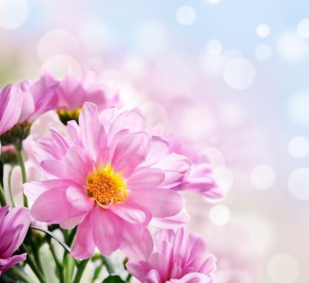 정원에서 아름 다운 핑크 꽃의 근접 촬영 스톡 콘텐츠 - 10537121