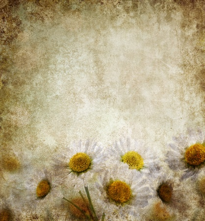 Grunge background with daisy flowers