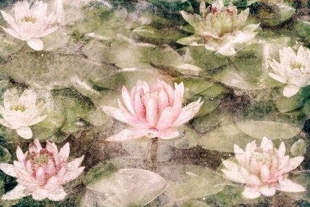 Water Lily on dirty grunge textured canvas photo