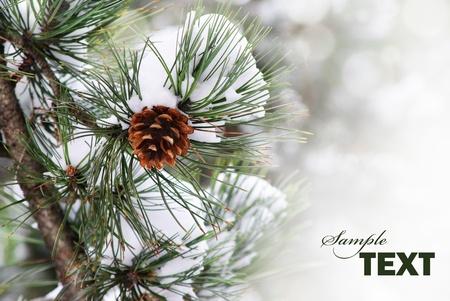 Pine branch under snow with copyspace