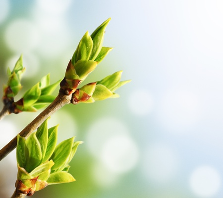 Green bud with bokeh background