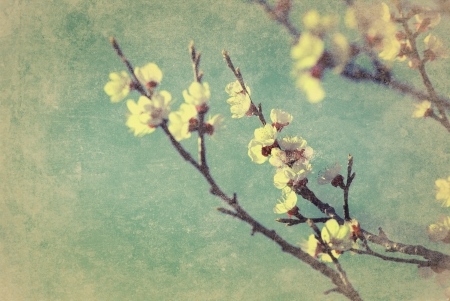 Cherry blossom with grunge texture overlay