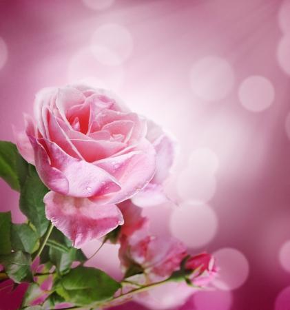 Beautiful pink rose with purple bokeh background Stock Photo - 13846055
