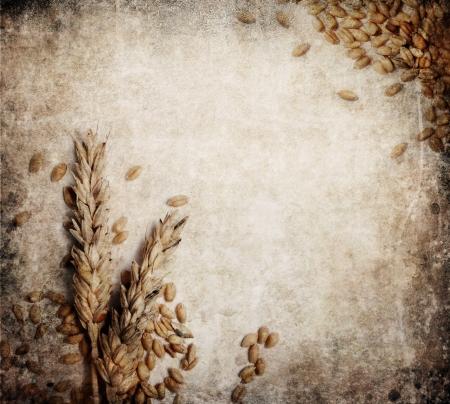 harina: Espigas de trigo en la textura de fondo grunge