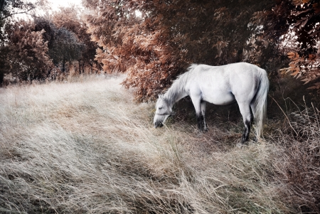 picturesque: White horse  Stock Photo