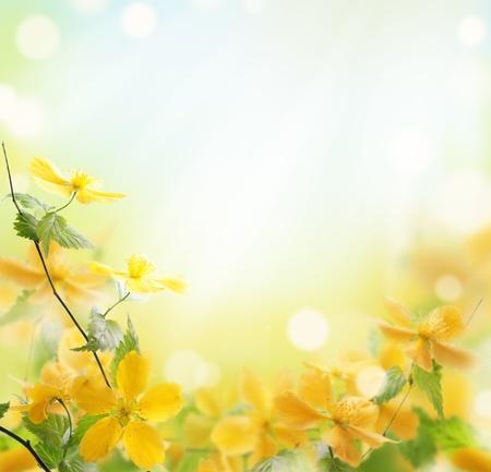 flowers bokeh: Closeup of beautiful yellow flowers in the garden Stock Photo