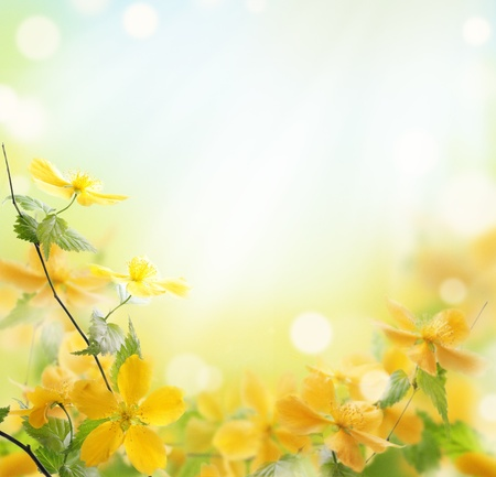 yellow daisy: Closeup of beautiful yellow flowers in the garden Stock Photo