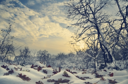 Winter landscape in vintage style photo