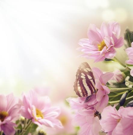 Красивые розовые цветы и бабочки в саду