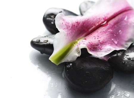 lirio acuatico: Spa piedras y pétalos de flores sobre fondo blanco Foto de archivo