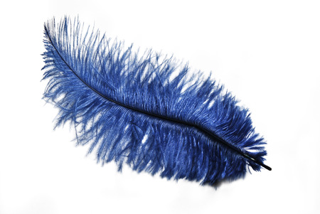 Blue feather isolated over white background photo