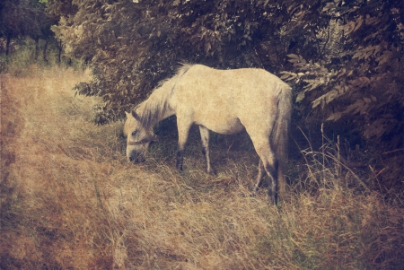 Vintage image of white horse in the field photo