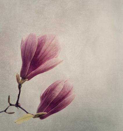 Beautiful magnolia flower on textured background photo