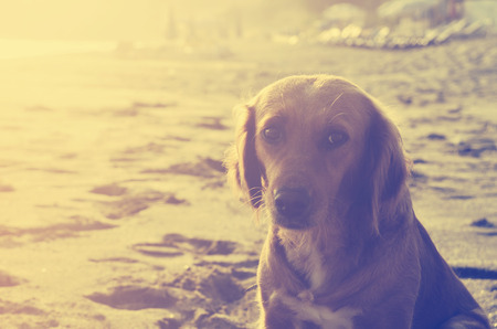 cross process: Dog on the beach at sunset