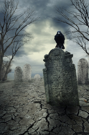 the crows: Graveyard with crow at night. Halloween concept. Stock Photo